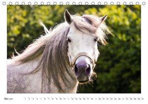 Der Pferdekalender