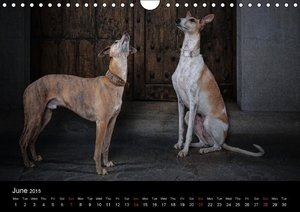 Urban Dogs - a singular style of dog photography / UK-Version (W