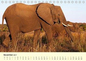 Naturparadies am Chobe - Botswanas wunderbarer Nationalpark (Tis