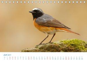 Singvögel - 12 Arten im Garten (Tischkalender 2017 DIN A5 quer)