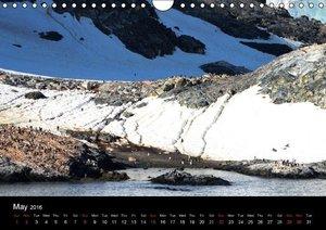 Amazing Antarctica (Wall Calendar 2016 DIN A4 Landscape)
