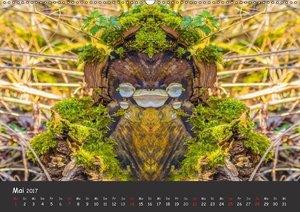 Baumgeister, Gesichter des Waldes