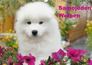 Verena Scholze, F: Samojeden Welpen (Wandkalender 2015 DIN A