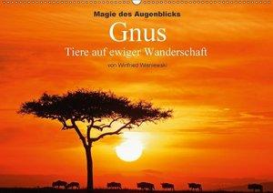 Magie des Augenblicks - Gnus - Tiere auf ewiger Wanderschaft