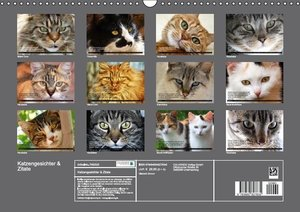 Stanzer, E: Katzengesichter & Zitate (Wandkalender 2015 DIN