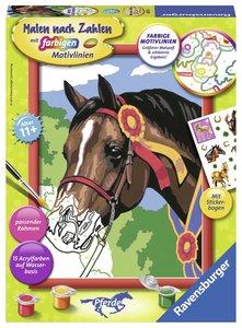 Pferd beim Reitturnier. Malen nach Zahlen Serie D Pferde