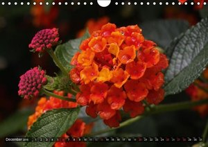 Summer Colours (Wall Calendar 2015 DIN A4 Landscape)