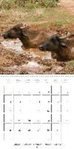 Zoo without Fences - Sri Lanka (Wall Calendar 2015 300 &times 30