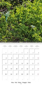 Zoo without Fences - Sri Lanka (Wall Calendar 2015 300 &times 30