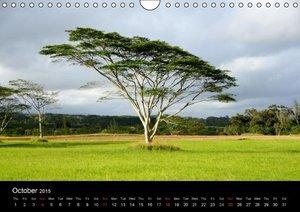 Ochsmann, S: Trees of Hawaii - UK Version