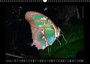 Butterflies 2015 Jewels of Nature (Wall Calendar 2015 DIN A3 Lan