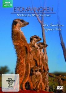 Erdmännchen-Wächter der Wüste im Team