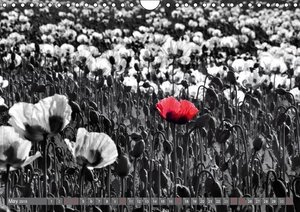 Red White Black (Wall Calendar 2015 DIN A4 Landscape)
