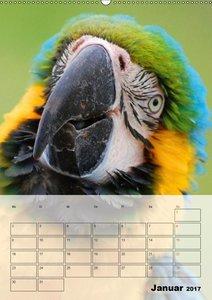 Aras. Der Papageien-Planer