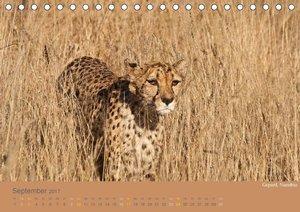 Afrika Impressionen. NAMIBIA - SÜDAFRIKA - BOTSWANA (Tischkalend