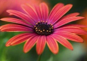 Blumige Brise - Visuelle Poesie der Blumen (Posterbuch DIN A2 qu