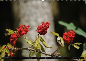 Rot - Red - Rosso - Rouge (Wandkalender 2017 DIN A2 quer)