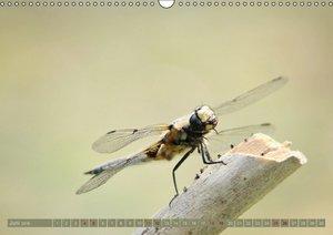 Die fabelhafte Welt der Libellen (Wandkalender 2016 DIN A3 quer)