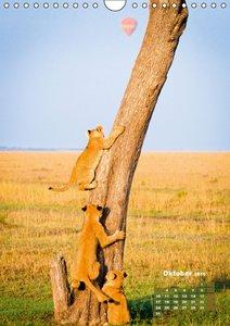Löwen: prächtige Raubkatzen (Wandkalender 2016 DIN A4 hoch)