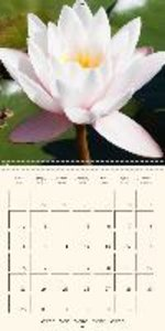 Waterlilies - elegant and delicate (Wall Calendar 2015 300 &time