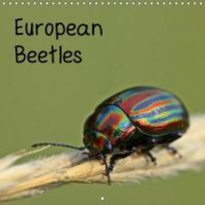 European Beetles (Wall Calendar 2015 300 × 300 mm Square)