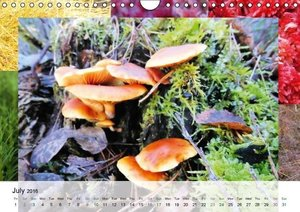 Swamplands Nature's Paintbox (Wall Calendar 2016 DIN A4 Landscap