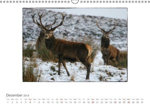 Wild Deer In The Highlands (Wall Calendar 2015 DIN A3 Landscape)