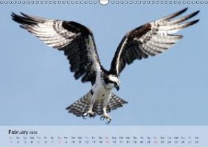Eagle and Co. Kings of the Sky (Wall Calendar 2015 DIN A3 Landsc