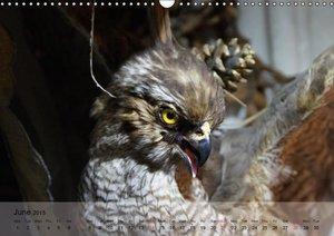 Eagle and Co. Kings of the Sky (Wall Calendar 2015 DIN A3 Landsc