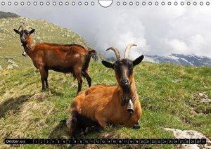 Weber, M: Schweizer Ziegenrassen (Wandkalender 2015 DIN A4 q