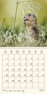 Animal Diary (Wall Calendar 2015 300 × 300 mm Square)