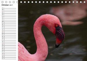 Wasservögel - Ein feuchtfröhlicher Familienplaner (Tischkalender