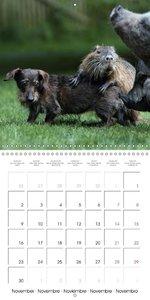 Funny Nutrias and Friends (Wall Calendar 2015 300 × 300 mm Squar