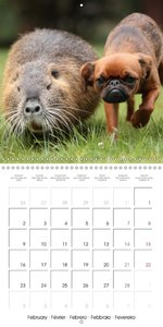 Funny Nutrias and Friends (Wall Calendar 2015 300 × 300 mm Squar