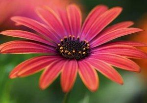 Blumige Brise - Visuelle Poesie der Blumen (Tischaufsteller DIN