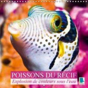 Explosion de couleurs sous la mer : poissons du récif (Calendrie