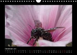 Everaars, J: The Wild Bees of Europe / UK Version