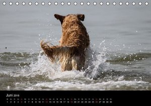 Spontane Fotografie: Tierpopos (Tischkalender 2016 DIN A5 quer)