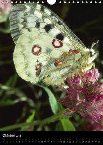 CALVENDO: Schmetterlilnge und Blumen (Wandkalender 2015 DIN