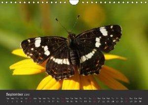 Beings of Lightness Butterflies (Wall Calendar 2015 DIN A4 Lands