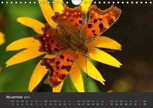 Beings of Lightness Butterflies (Wall Calendar 2015 DIN A4 Lands