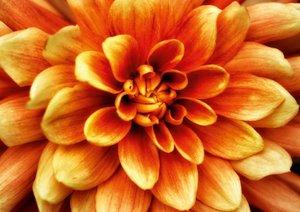Blüten im Fokus - Blumen Impression (Posterbuch DIN A4 quer)
