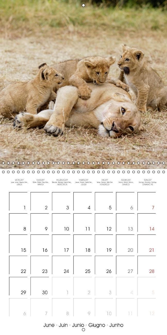 Emotional Moments: Lion cubs - so sweet. (Wall Calendar 2015 300 - zum Schließen ins Bild klicken