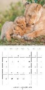 Emotional Moments: Lion cubs - so sweet. (Wall Calendar 2015 300