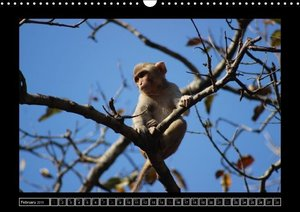 Rhesus Monkeys Part A / UK-Version (Wall Calendar 2015 DIN A3 La