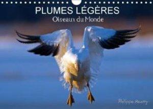 PLUMES LÉGÈRES. Oiseaux du Monde (Calendrier mural 2015 DIN A4 h