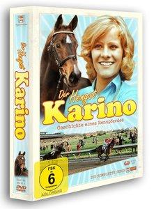Der Hengst Karino