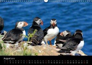 Valder, N: Puffins, Papageitauchern ganz nah (Wandkalender 2