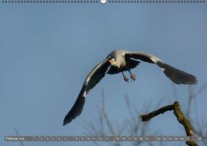 INNE BOTANIK - Vögel im Ruhrpott (Wandkalender 2016 DIN A2 quer)