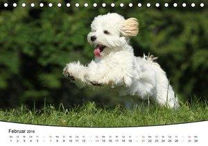 Welpen - Puppies (Tischkalender 2016 DIN A5 quer)